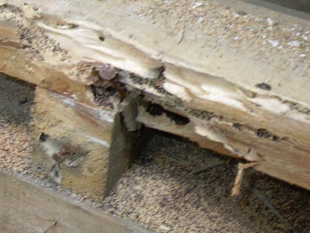 シロアリの巣穴の状況
