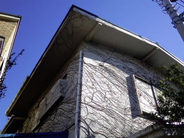 ツタ類の植物で覆われた住宅